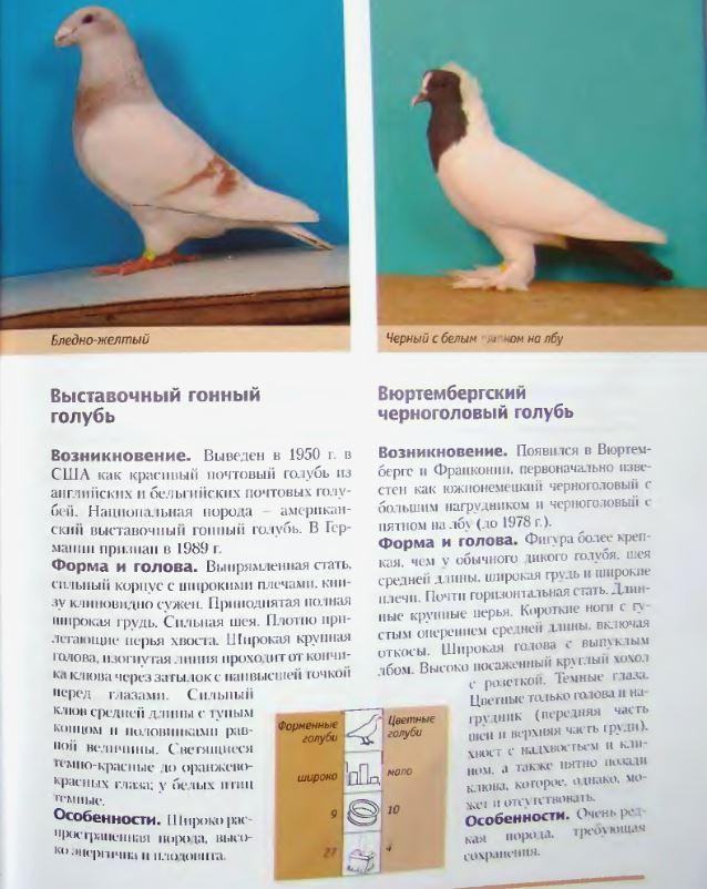 Породы голубей Image198