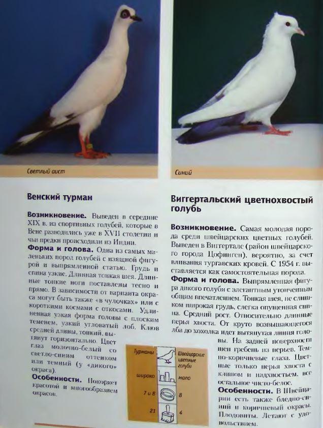 Породы голубей Image200