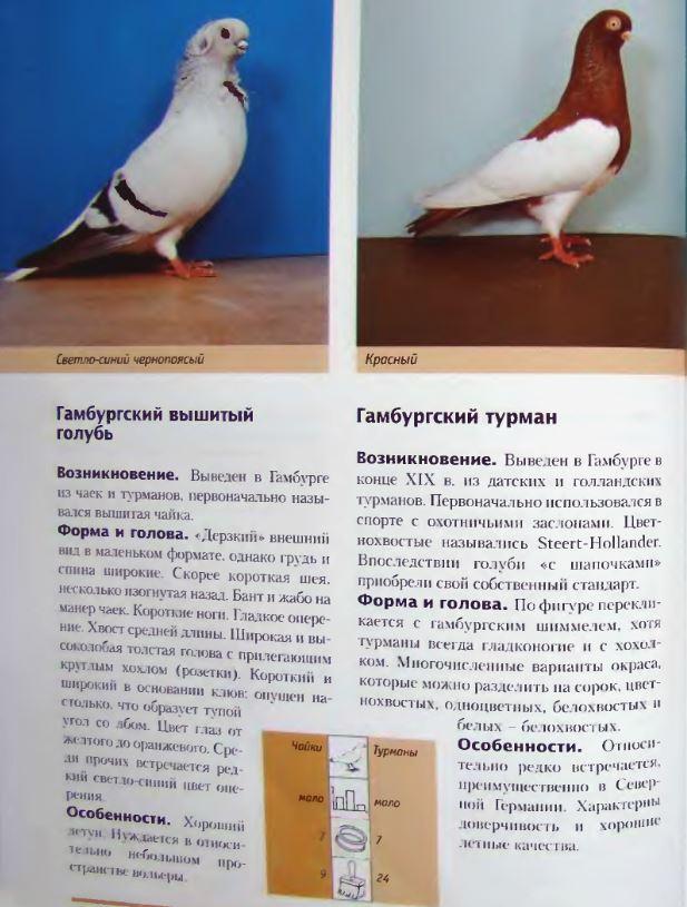 Породы голубей Image201