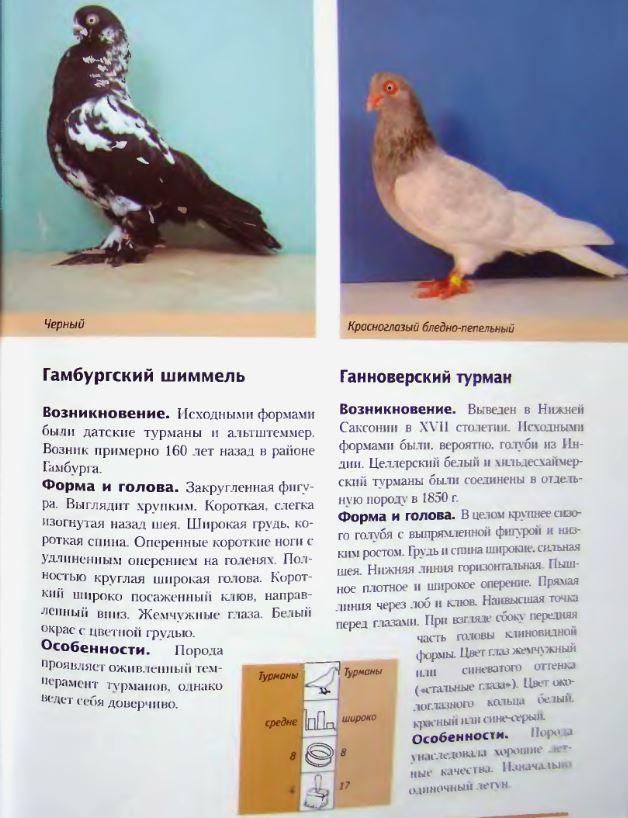 Породы голубей Image202