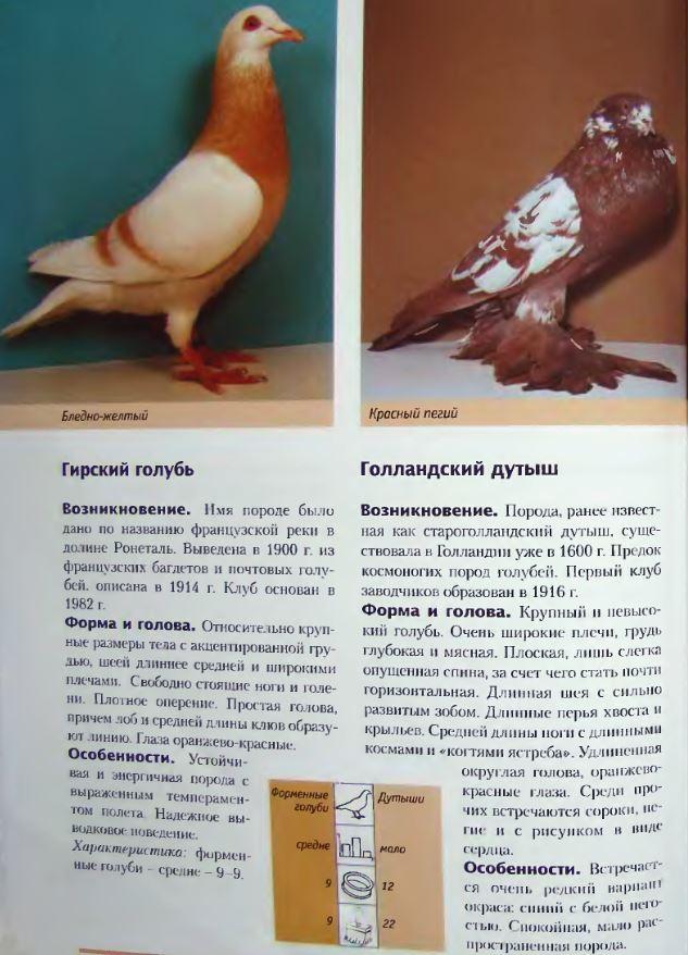 Породы голубей Image206