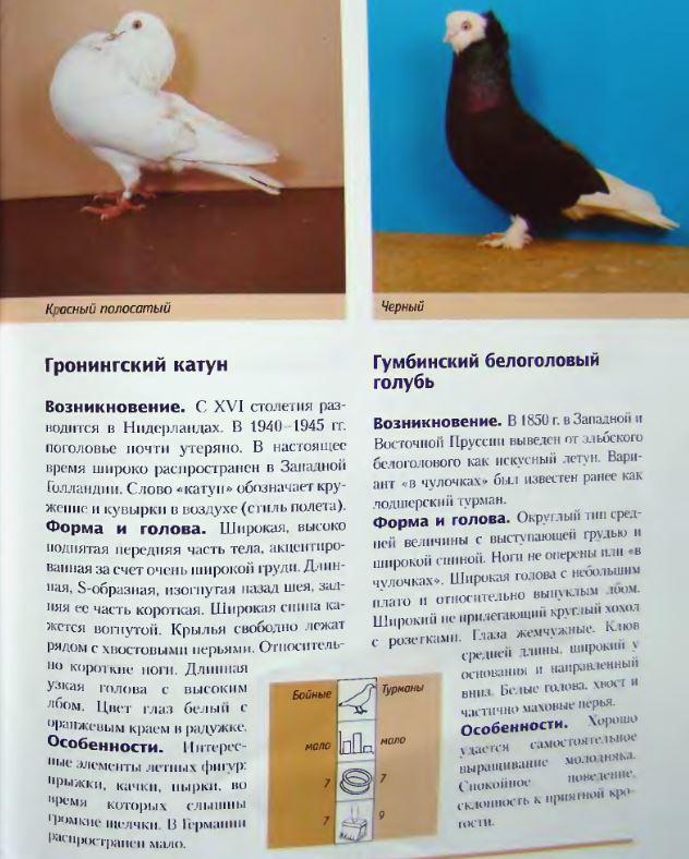 Породы голубей Image207