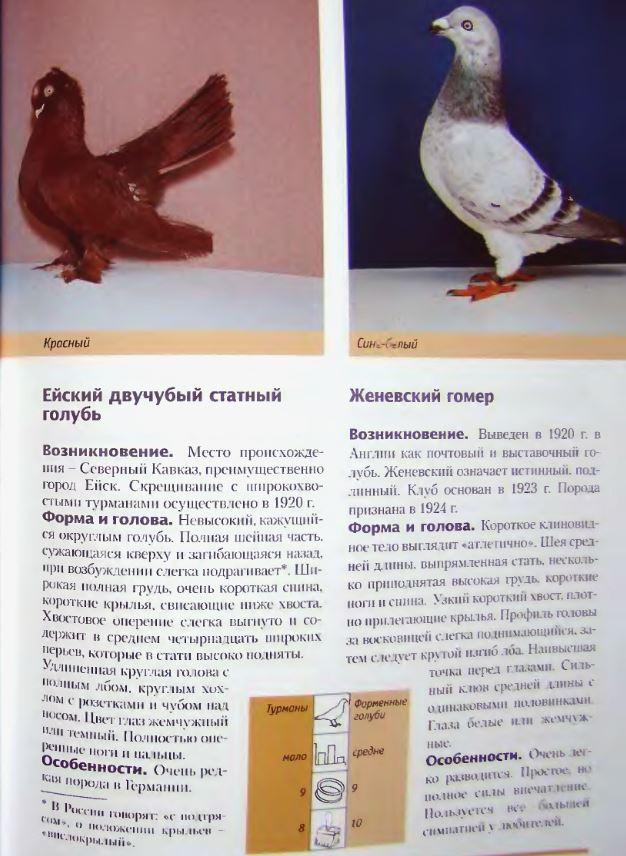 Породы голубей Image210
