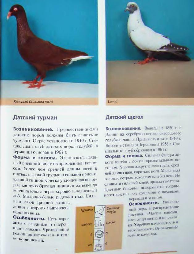 Породы голубей Image211