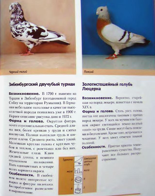 Породы голубей Image214