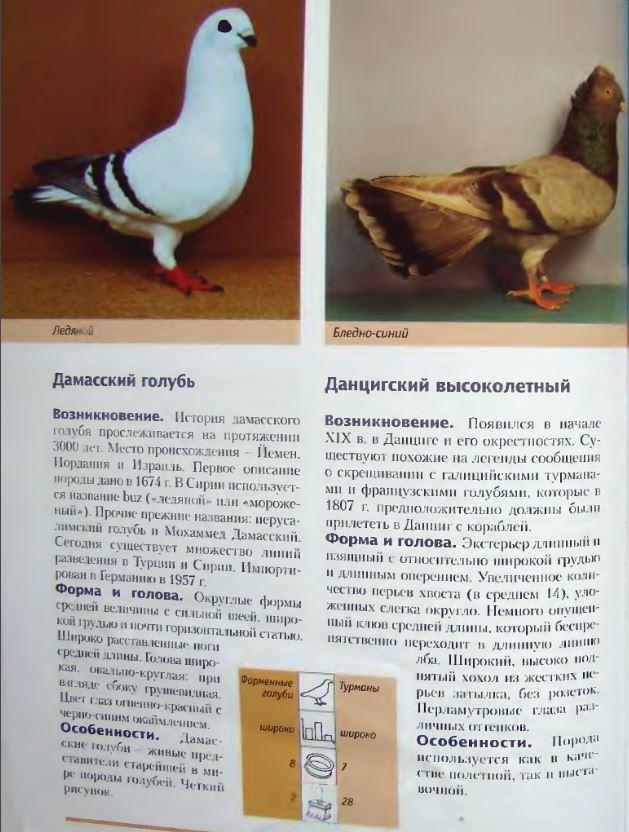 Породы голубей Image215