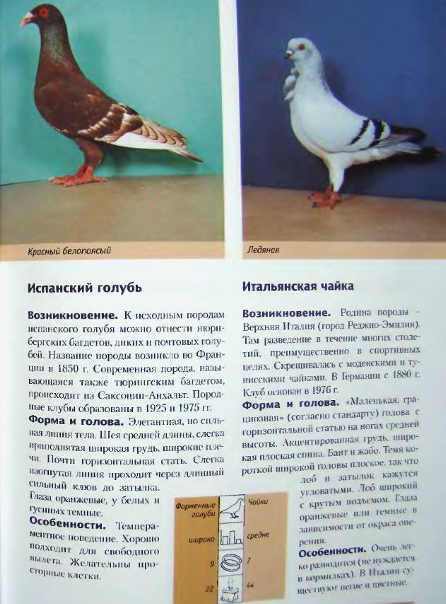 Породы голубей Image216