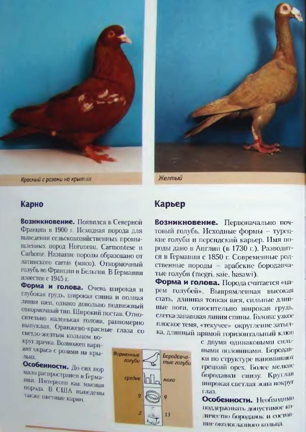Породы голубей Image217