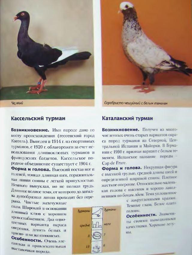 Породы голубей Image218