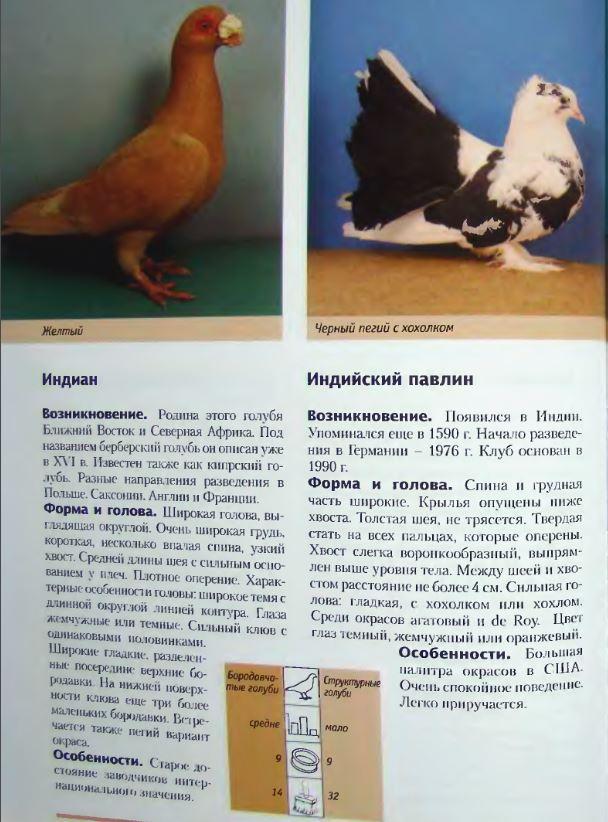 Породы голубей Image219