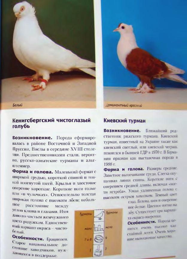 Породы голубей Image220