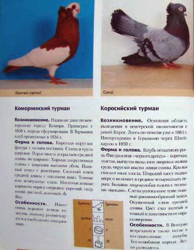 Породы голубей Image224