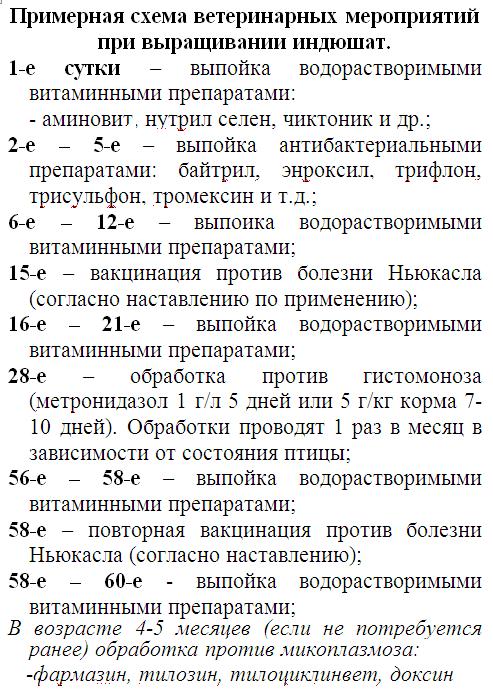 Выведение индюшат - Страница 21 Image239