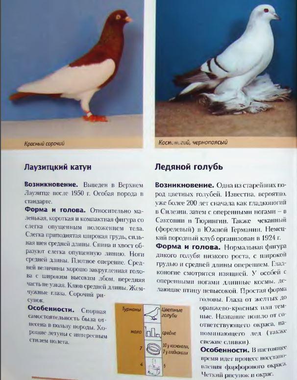 Породы голубей Image241