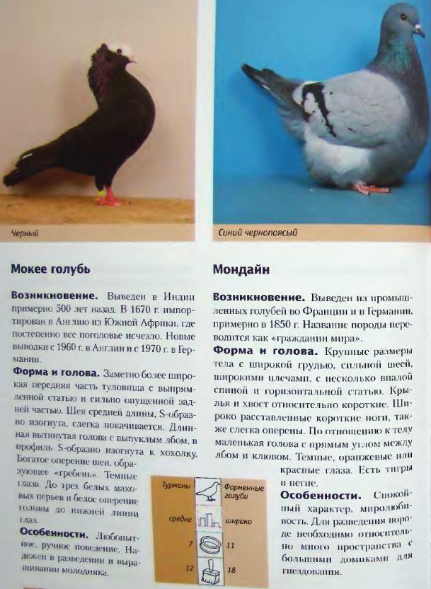 Породы голубей Image244
