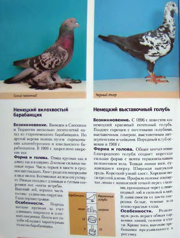 Породы голубей - Страница 2 Image246