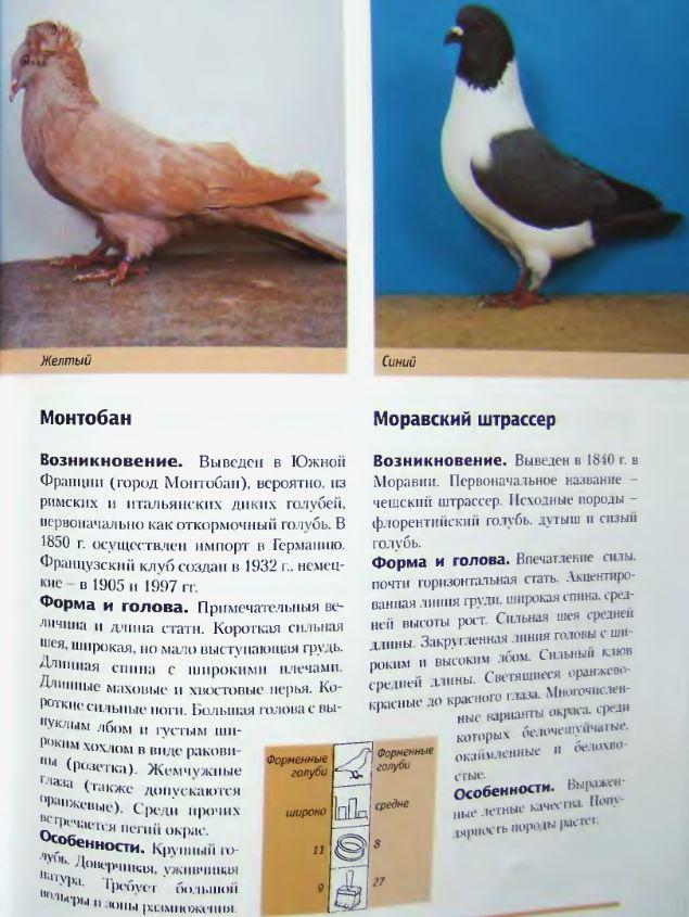Породы голубей - Страница 2 Image247