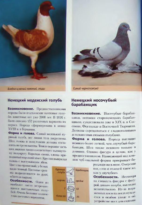 Породы голубей - Страница 2 Image248