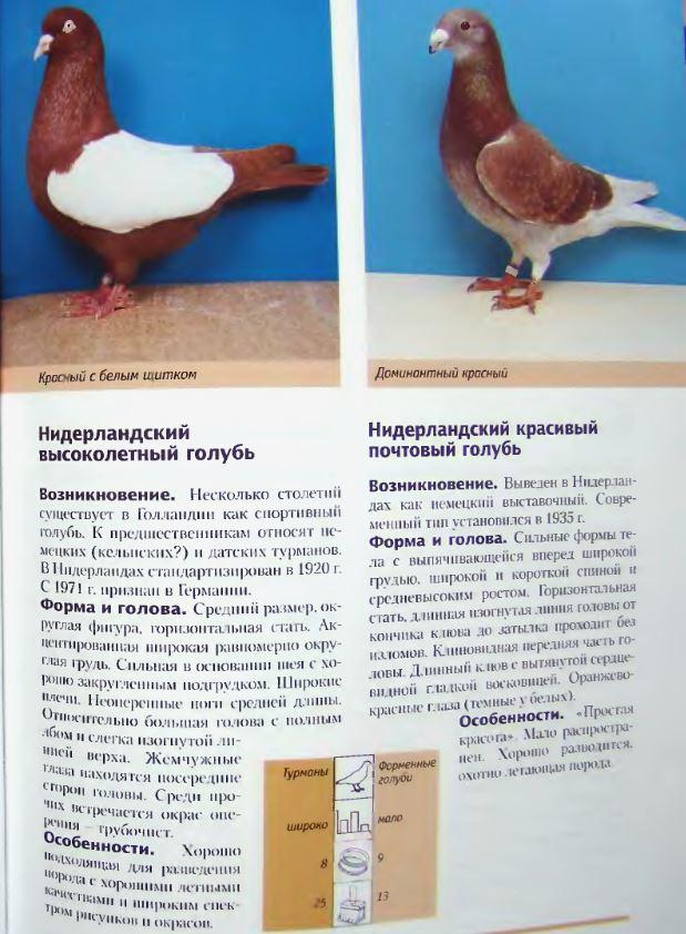 Породы голубей - Страница 2 Image250