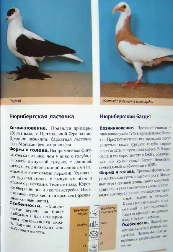 Породы голубей - Страница 2 Image253
