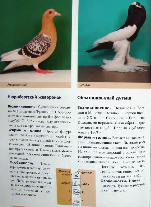 Породы голубей - Страница 2 Image254