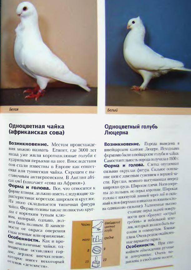Породы голубей - Страница 2 Image255
