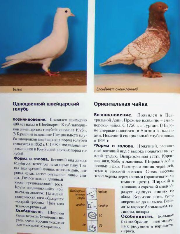 Породы голубей - Страница 2 Image257