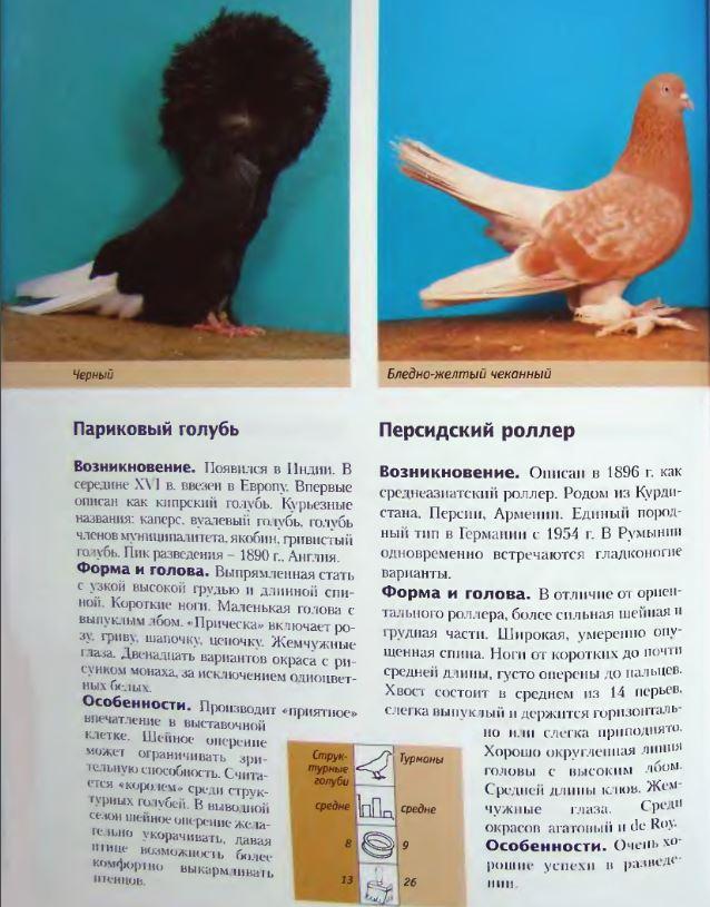Породы голубей - Страница 2 Image259