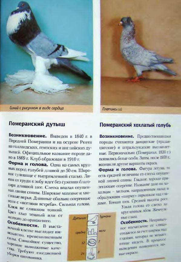 Породы голубей - Страница 2 Image263