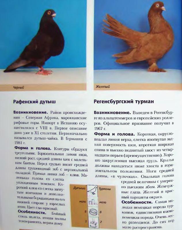 Породы голубей - Страница 2 Image264