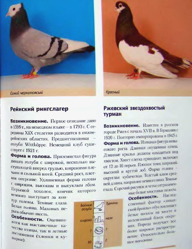 Породы голубей - Страница 2 Image267