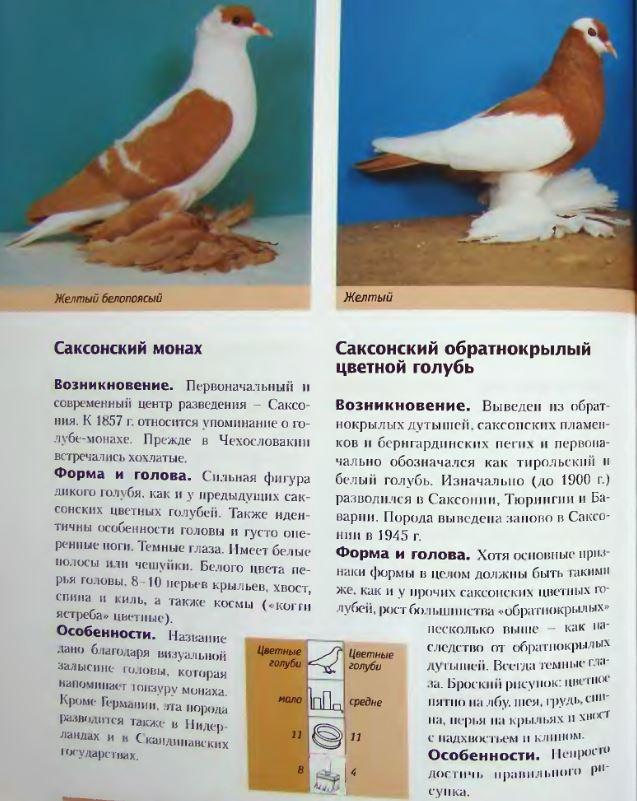 Породы голубей - Страница 2 Image269