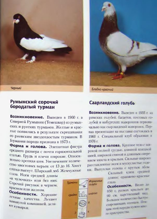 Породы голубей - Страница 2 Image270