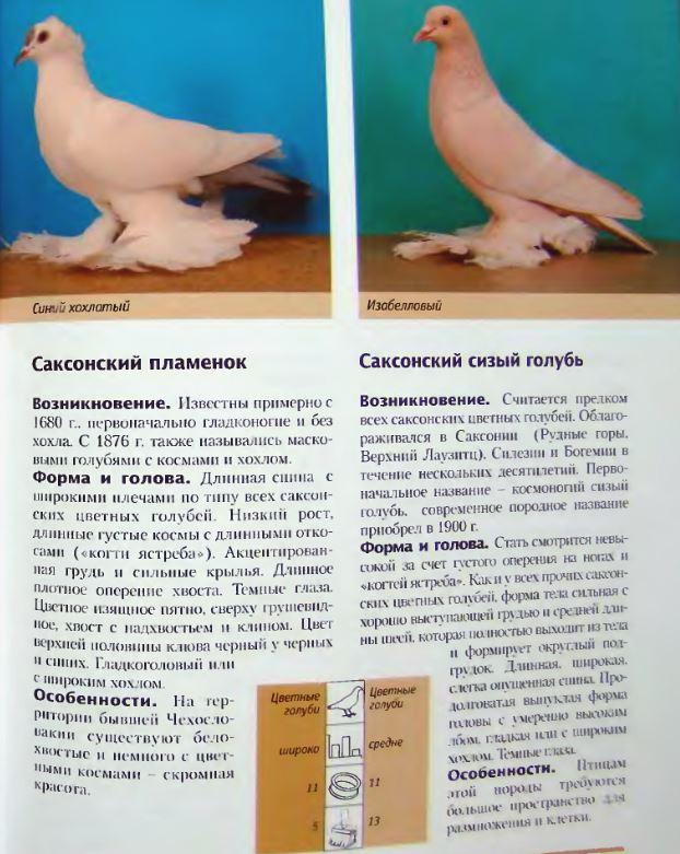 Породы голубей - Страница 2 Image271