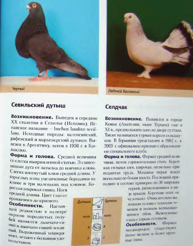 Породы голубей - Страница 2 Image273