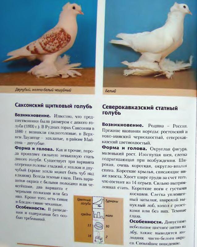 Породы голубей - Страница 2 Image274
