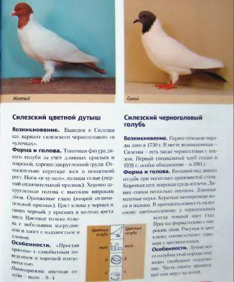 Породы голубей - Страница 2 Image275