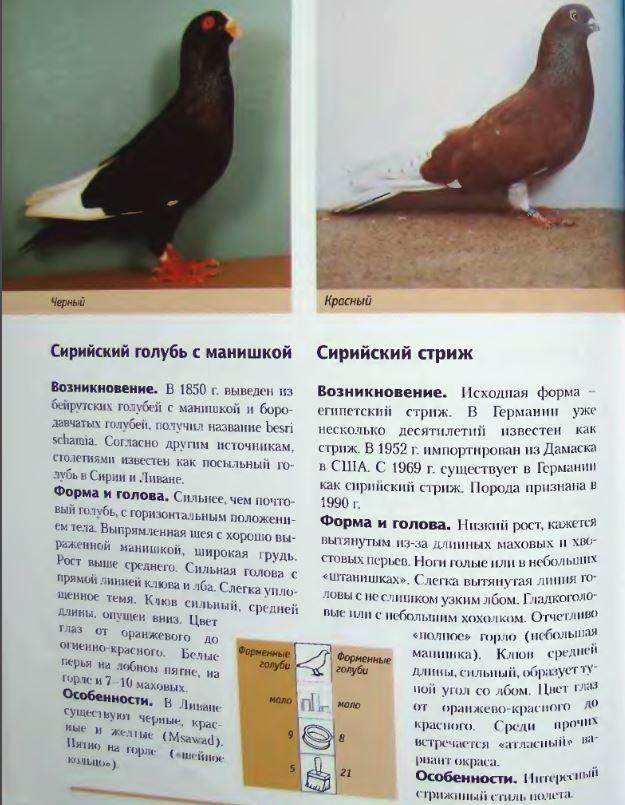 Породы голубей - Страница 2 Image276