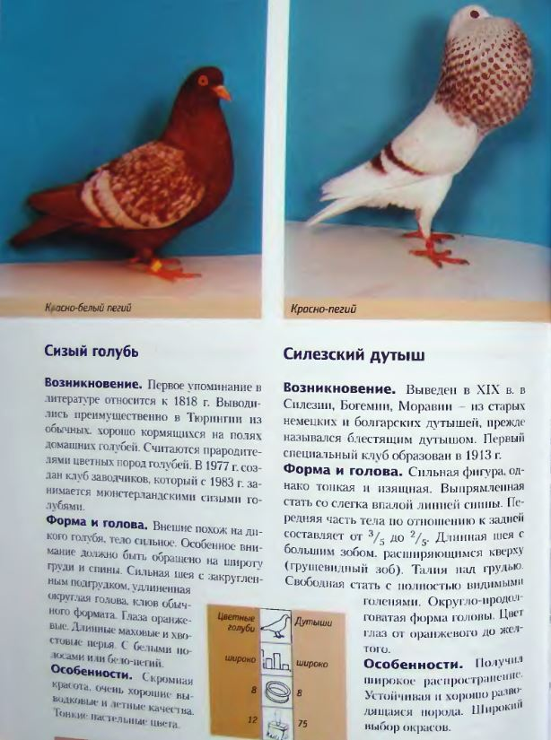Породы голубей - Страница 2 Image277