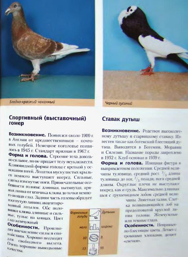 Породы голубей - Страница 2 Image278