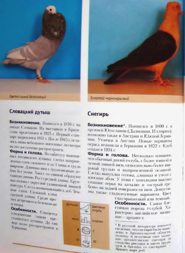 Породы голубей - Страница 2 Image279