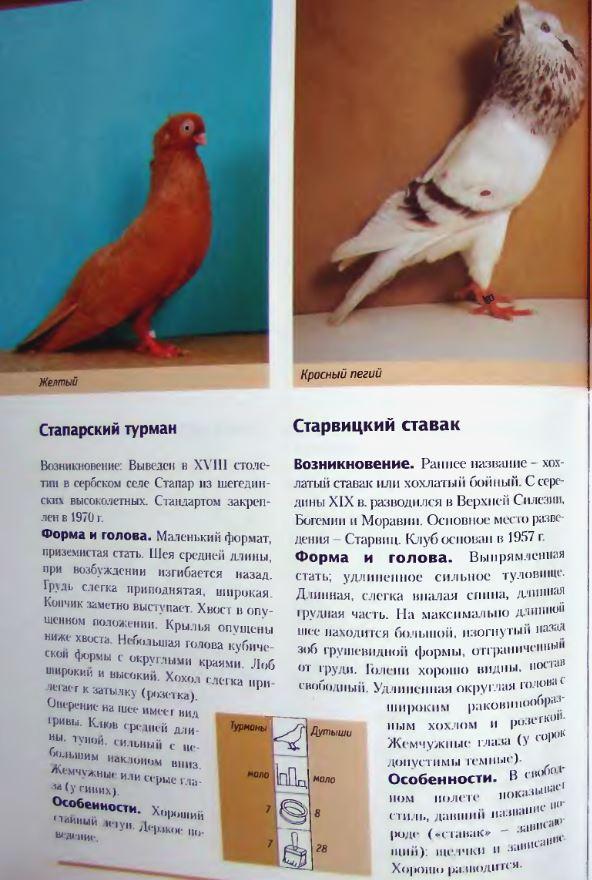Породы голубей - Страница 2 Image280