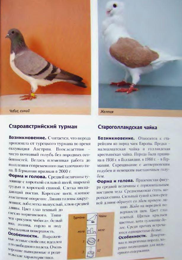 Породы голубей - Страница 2 Image281