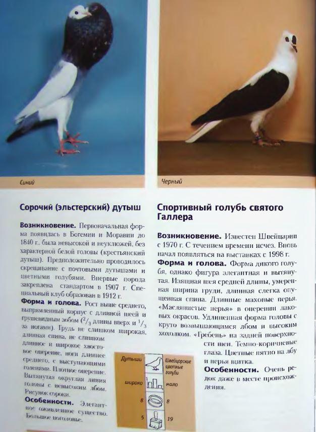 Породы голубей - Страница 2 Image282