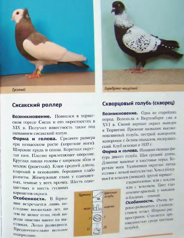 Породы голубей - Страница 2 Image283