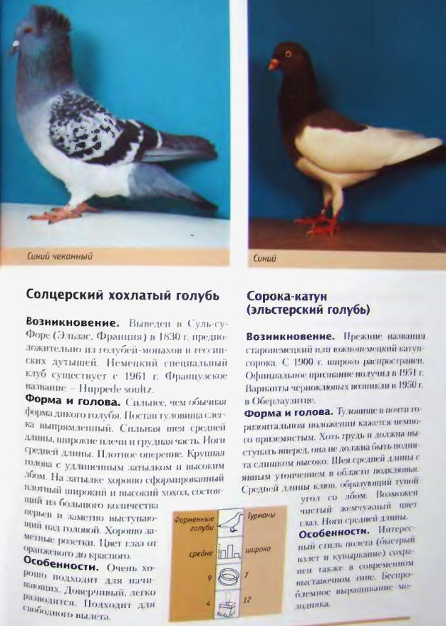 Породы голубей - Страница 2 Image284