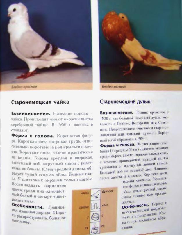 Породы голубей - Страница 2 Image285