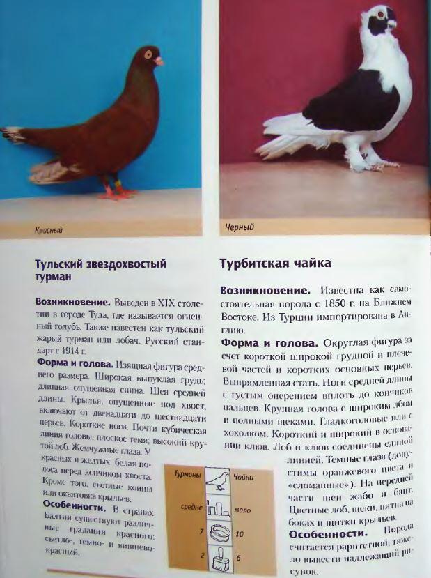 Породы голубей - Страница 2 Image288
