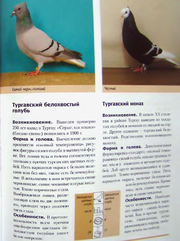 Породы голубей - Страница 2 Image289