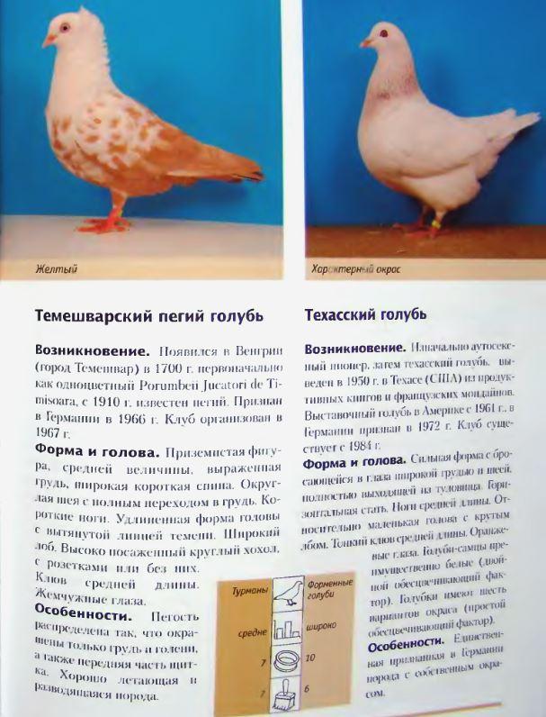 Породы голубей - Страница 2 Image290